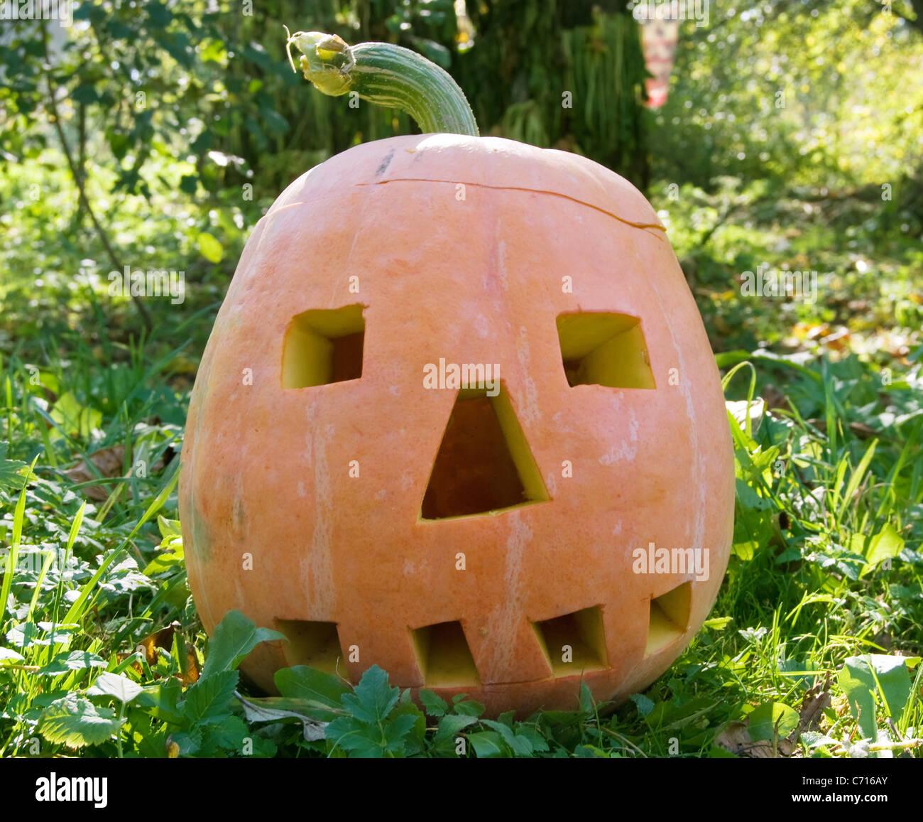 halloween pumpkin on greenery to the grass - Stock Image
