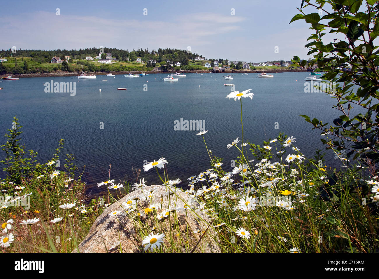 Inlet with fishing boats and daisies, fishing harbor, Machias Maine, USA - Stock Image