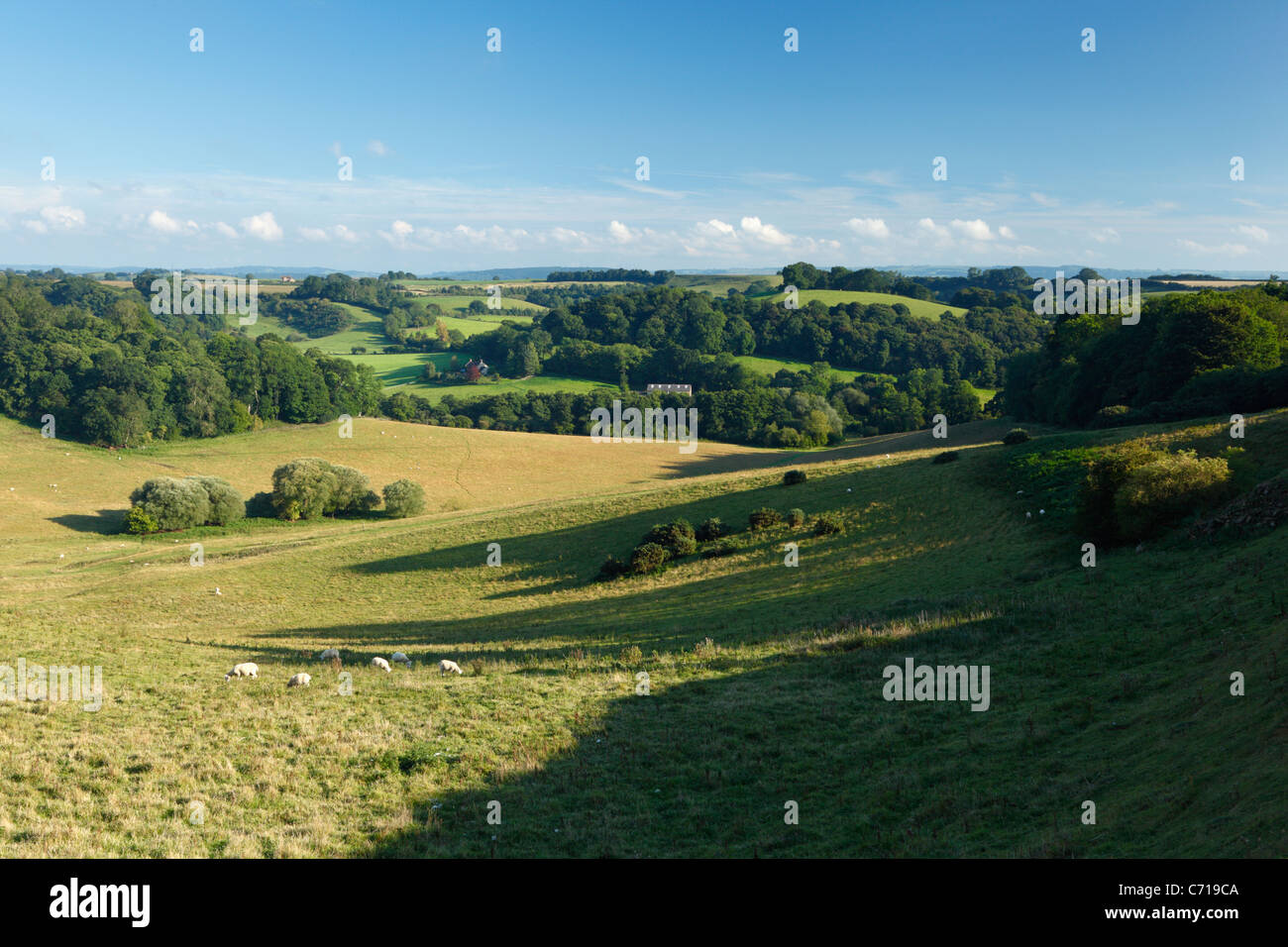 View into Witcombe Valley (Site of a Medieval Village) from Butcher's Hill. Ham Hill Country Park. Somerset. - Stock Image