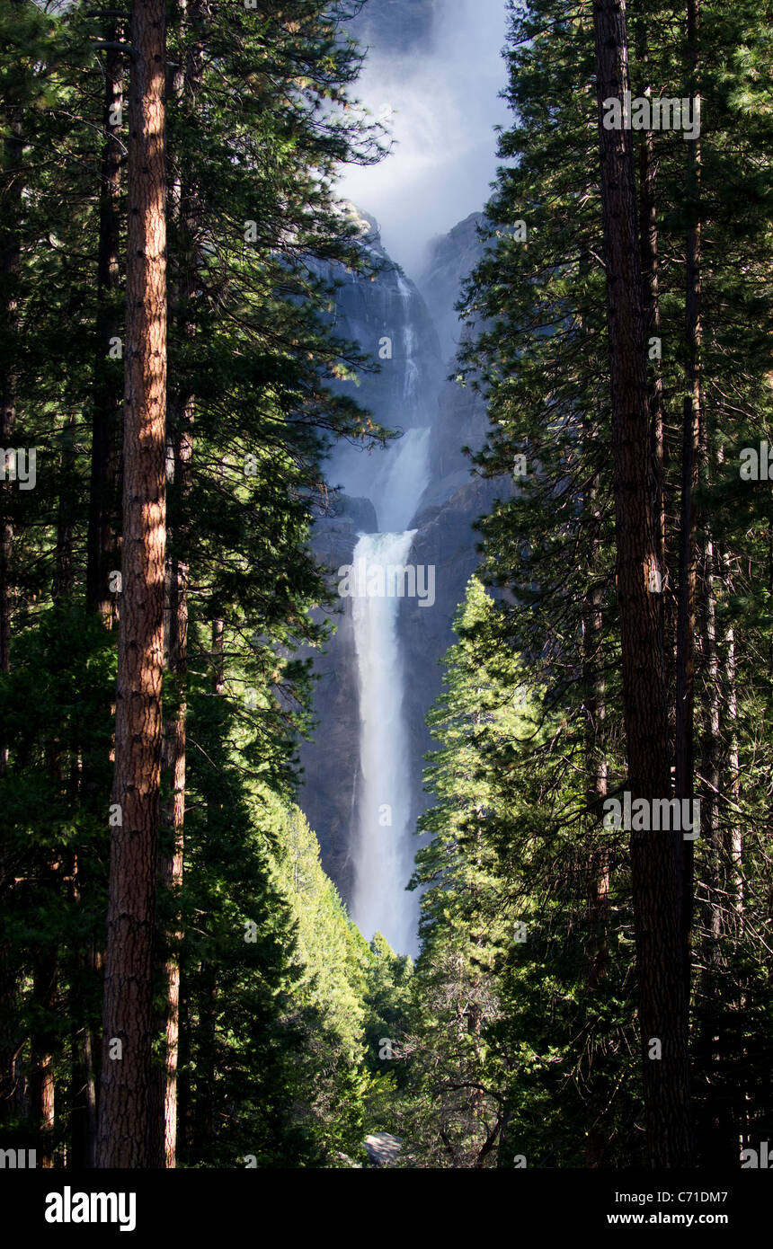 Lower Yosemite Falls pictured through the trees lining the path to the viewing area in Yosemite National Park, California. - Stock Image