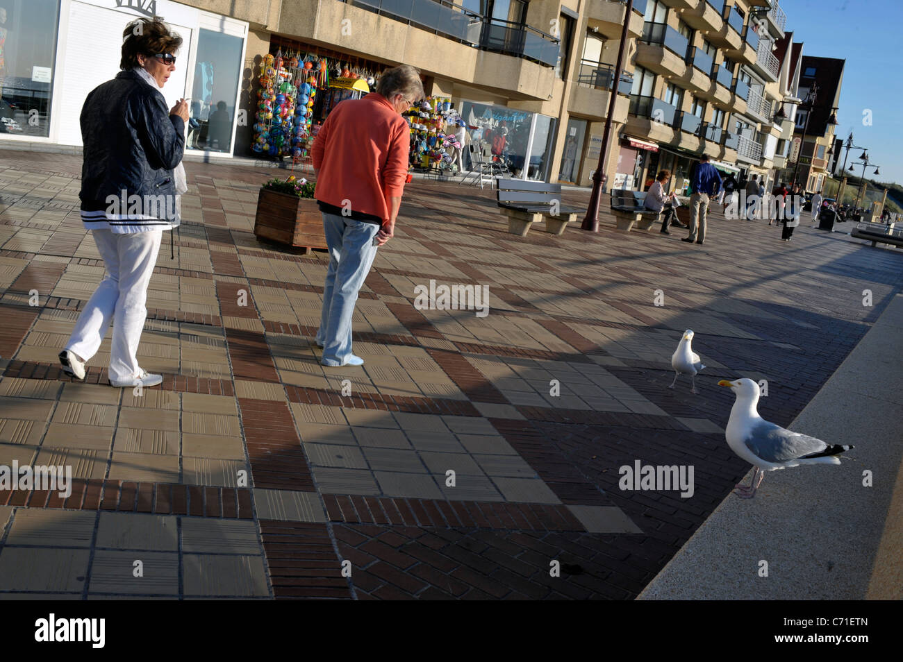 Two women walking down the cornice in Ostende with two seagulls watching. Ostende, Belgium - Stock Image