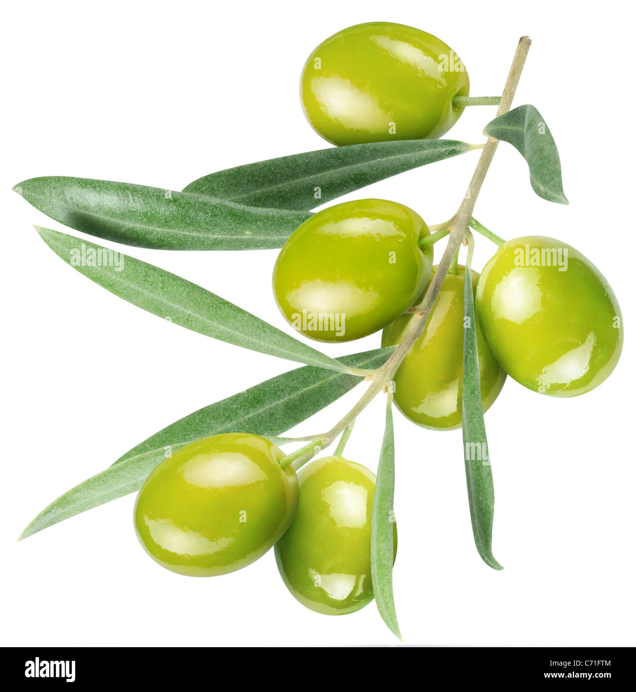 Olives on branch with leaves isolated on white. File contains a path to cut. - Stock Image