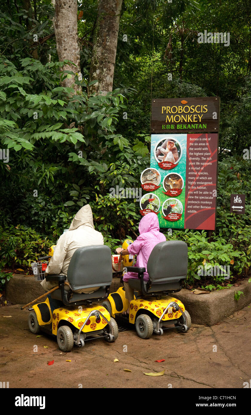 Two  people riding in disability scooters provided by Singapore Zoo, Singapore Asia - Stock Image