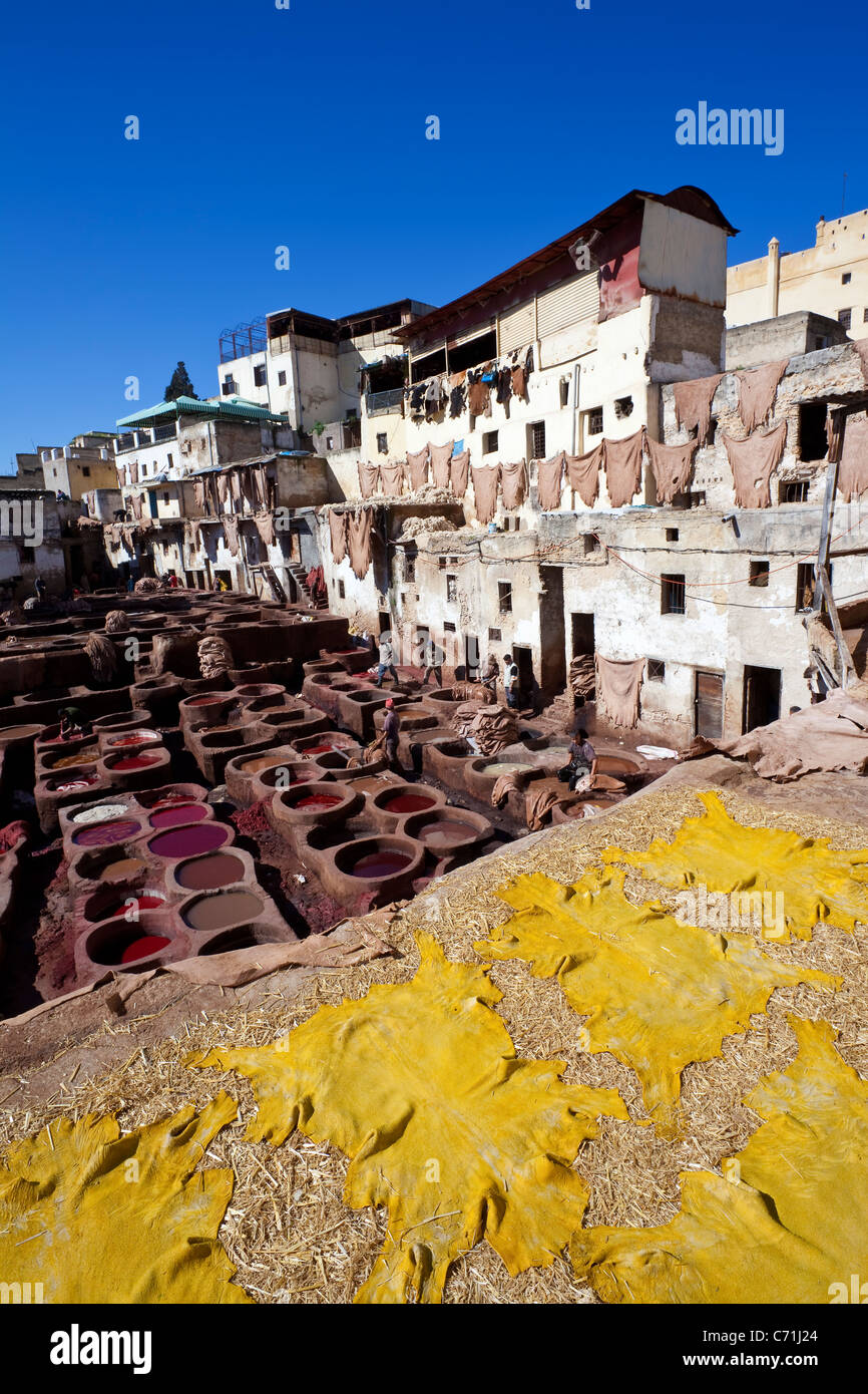 Skins drying at the tanneries in Fes, Morocco, North Africa - Stock Image