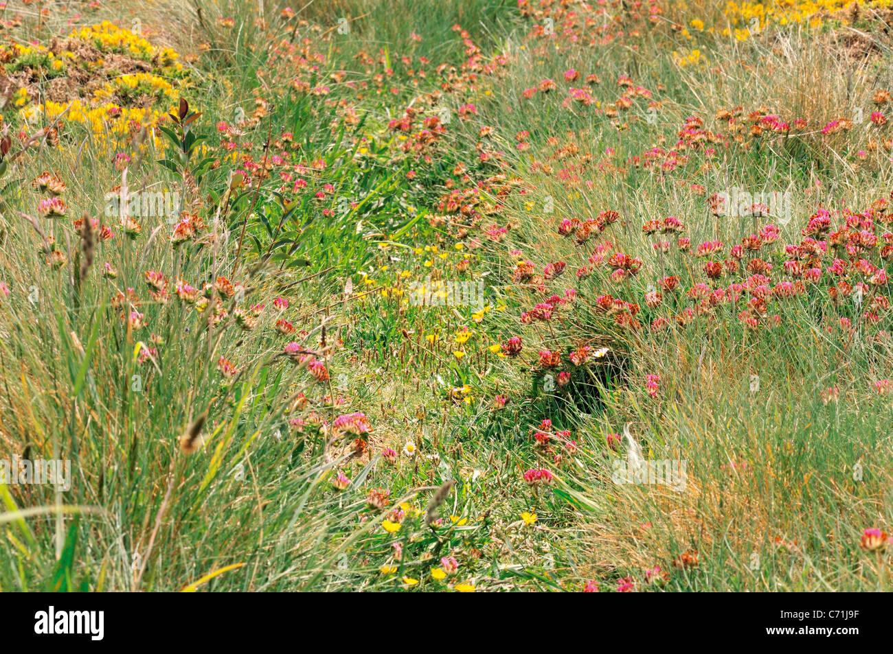 Spain, Galicia: coastal vegetation around beach Praia As Catedrais - Stock Image