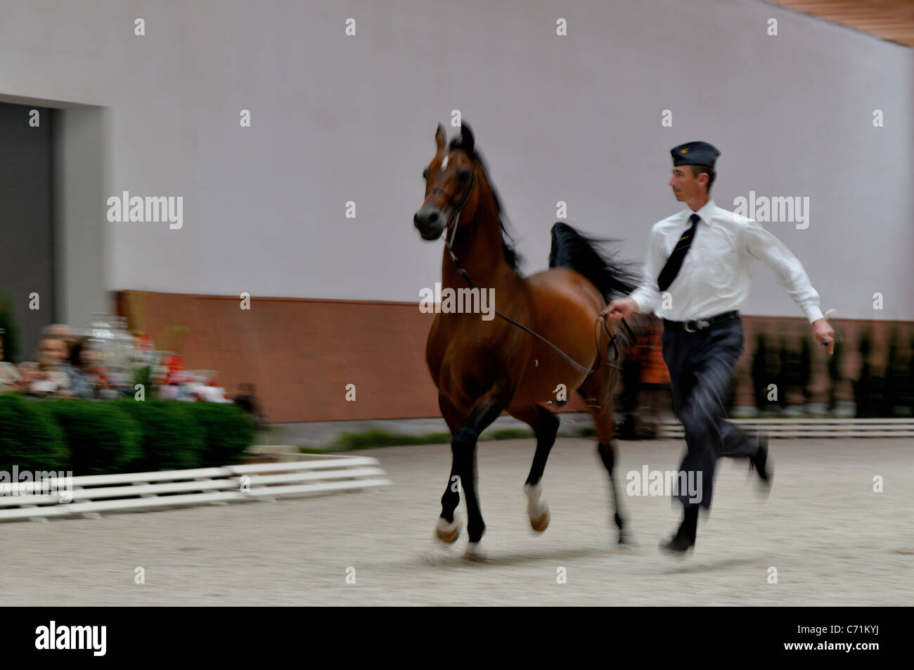 Arabian horse show and Breeding Parade -  Michalow - Stock Image