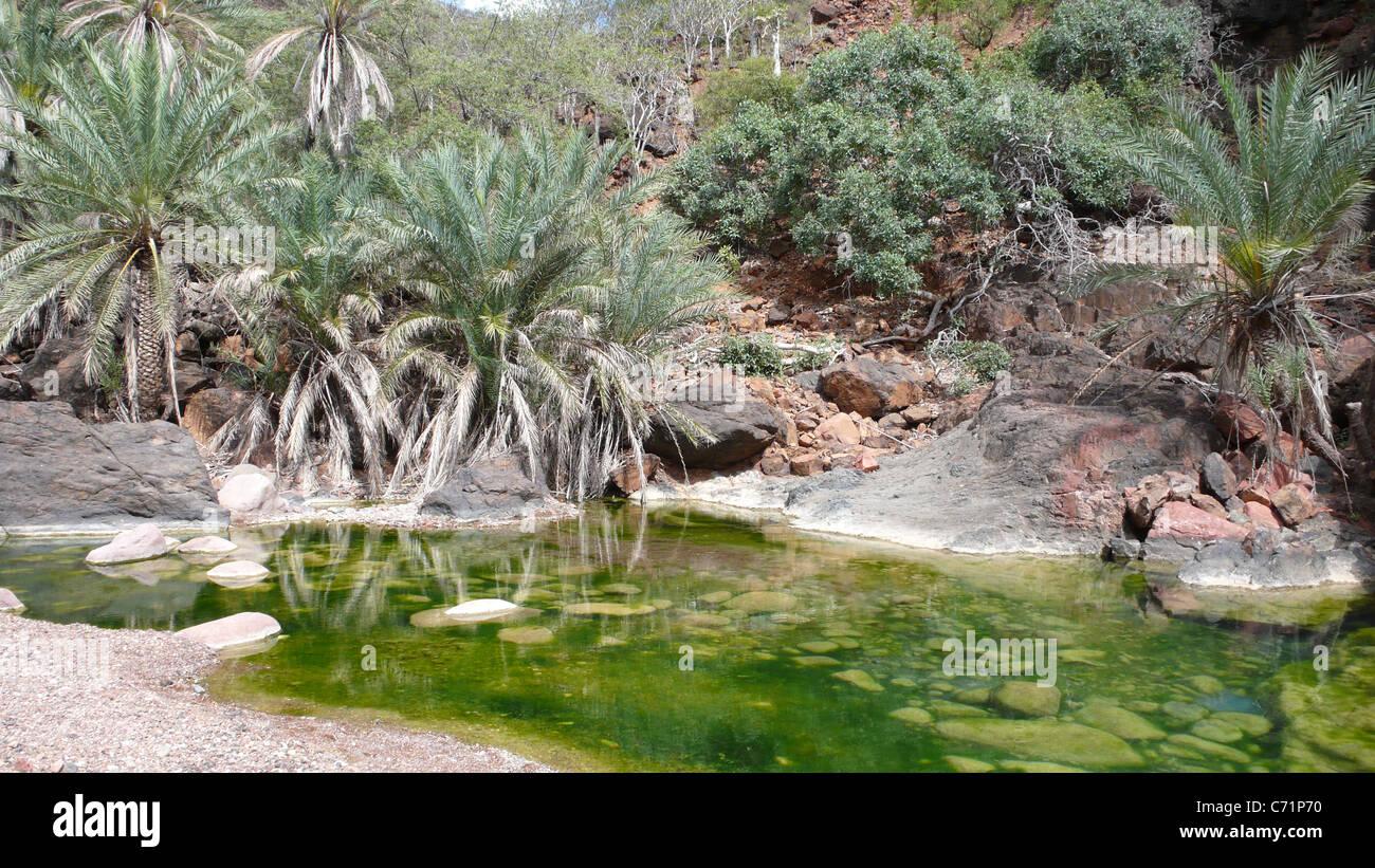 Water hole in Wadi Daerhu, Socotra, Yemen - Stock Image
