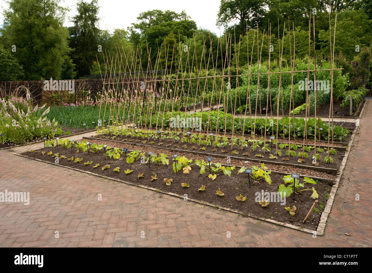 The Fruit And Vegetable Garden In June, RHS Rosemoor, England, United  Kingdom Nice Look