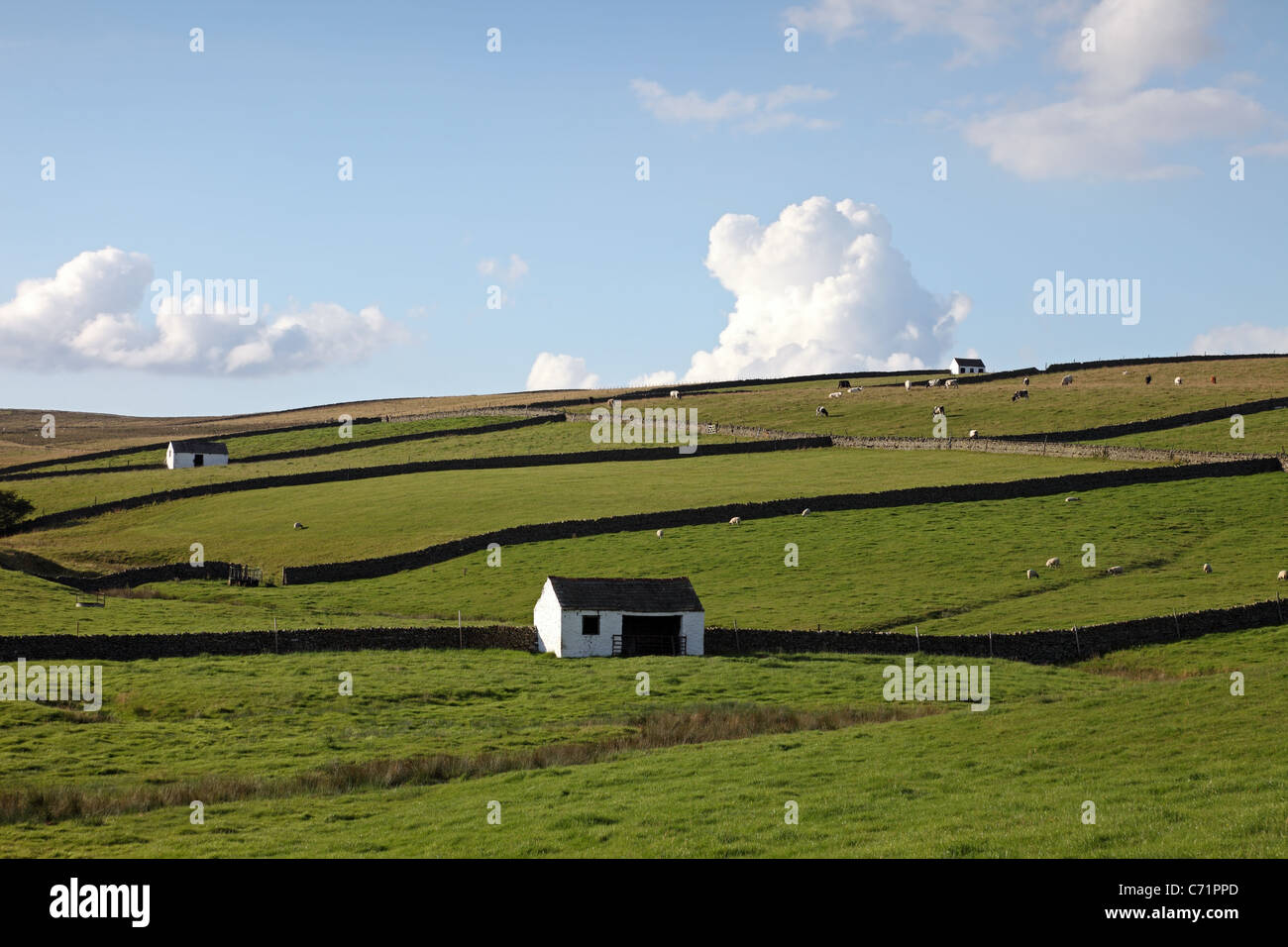 Farmland with White Barns Near Bowlees Upper Teesdale County Durham Northern England UK - Stock Image