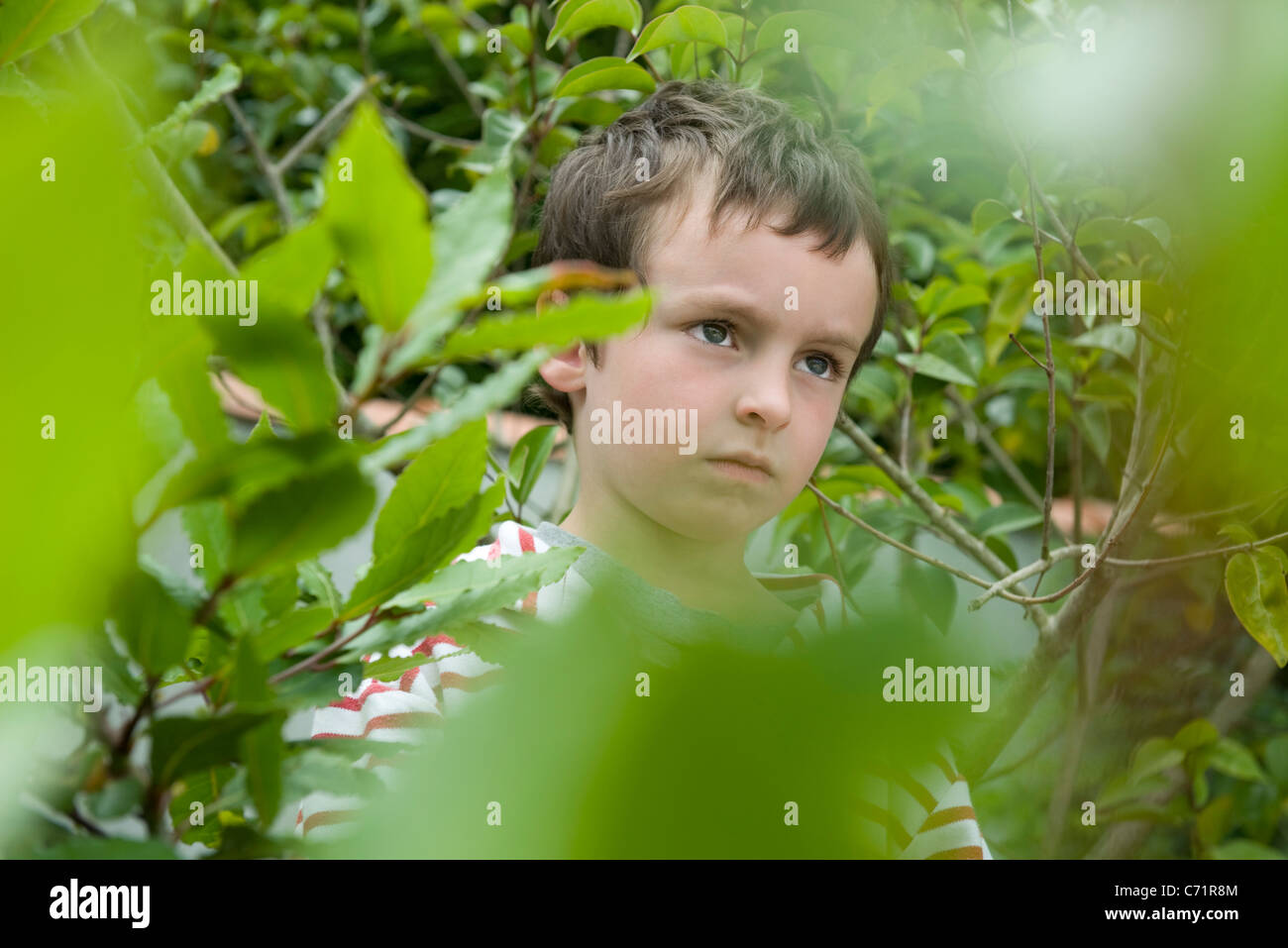 Boy in foliage, looking up in thought - Stock Image