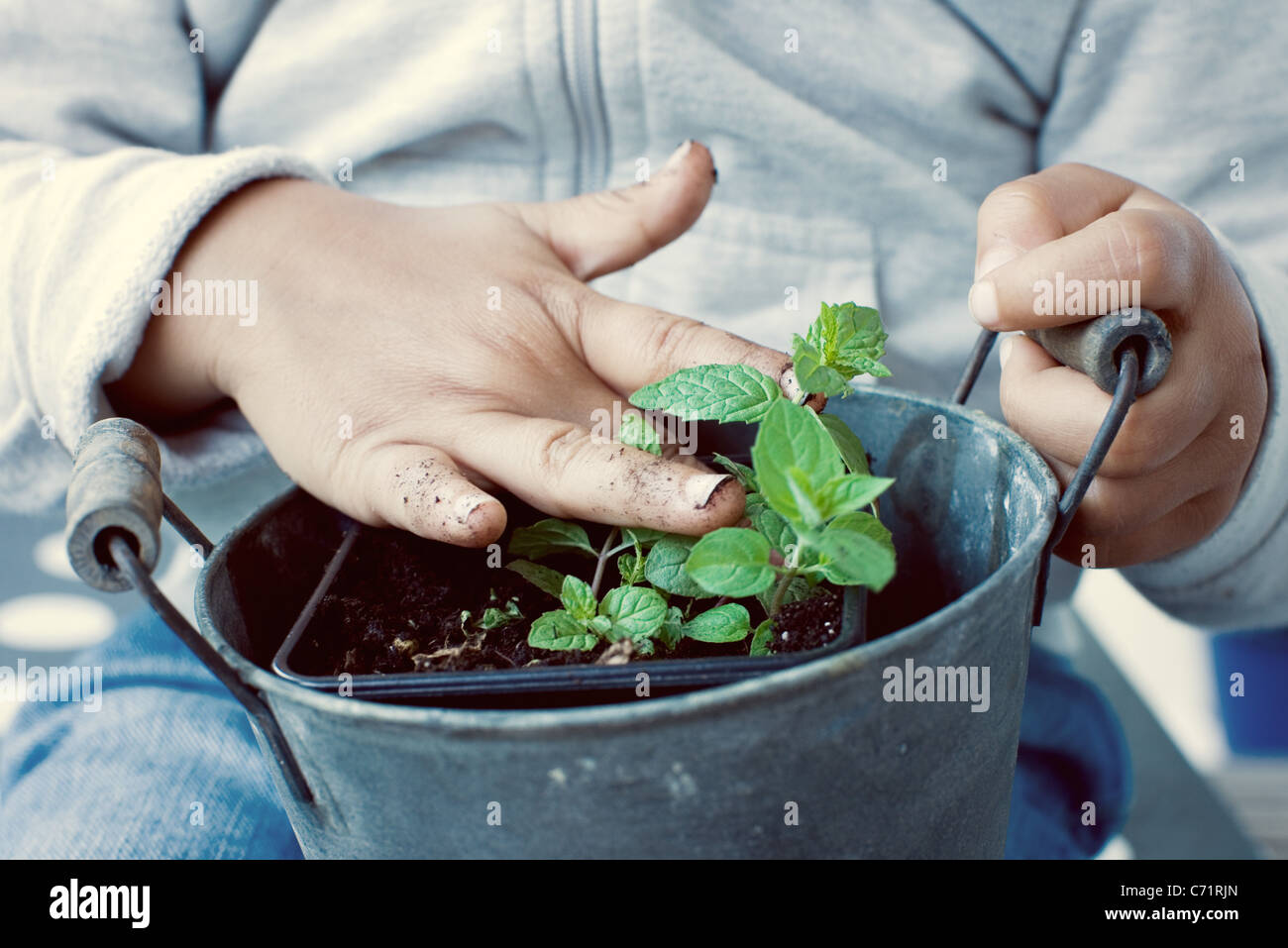 Child touching soil of mint plant, mid section - Stock Image