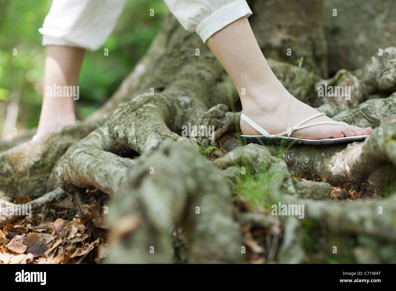 Woman wearing sandals walking on roots of tree, low section - Stock Image