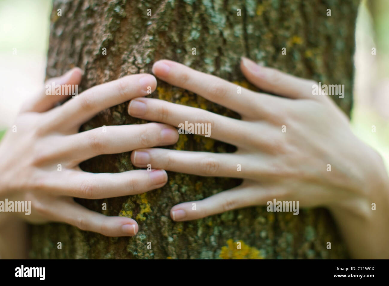 Woman's hands embracing tree - Stock Image
