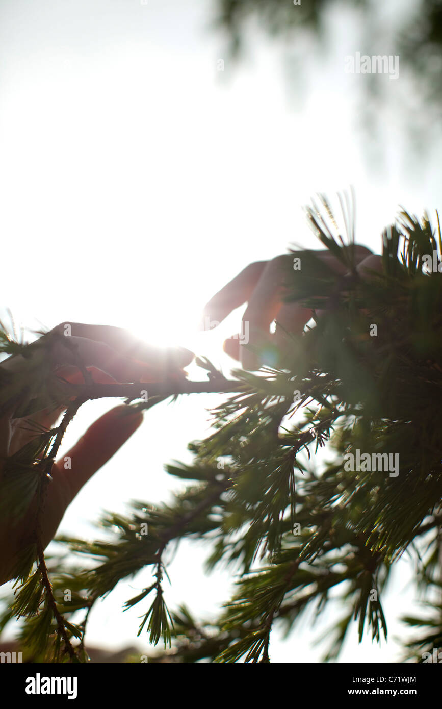 Silhouette of tree branches - Stock Image