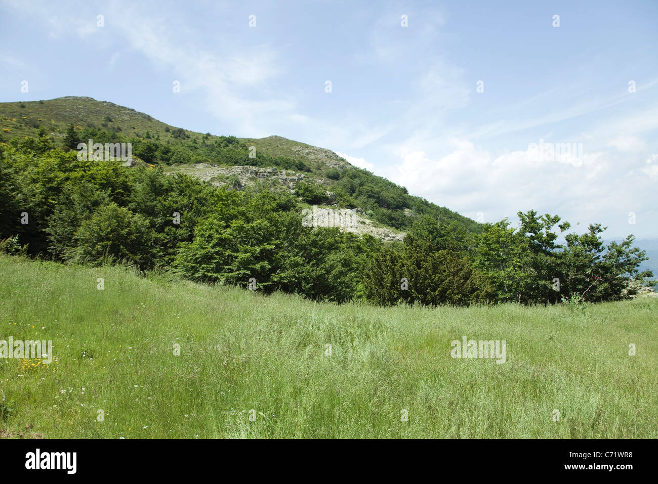 Meadow and mountain - Stock Image