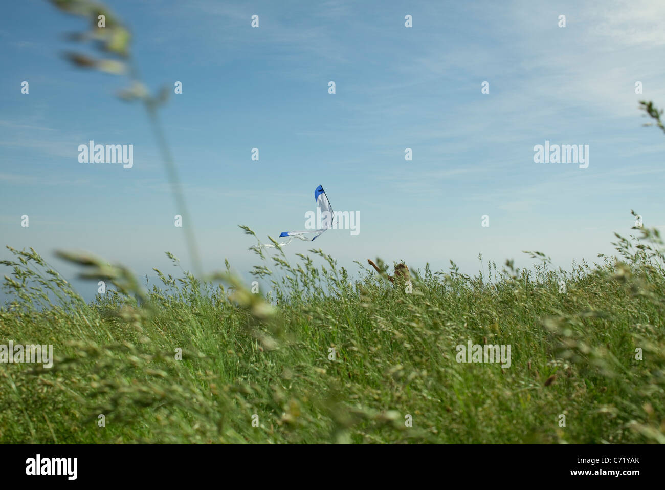 Person flying kite in field - Stock Image