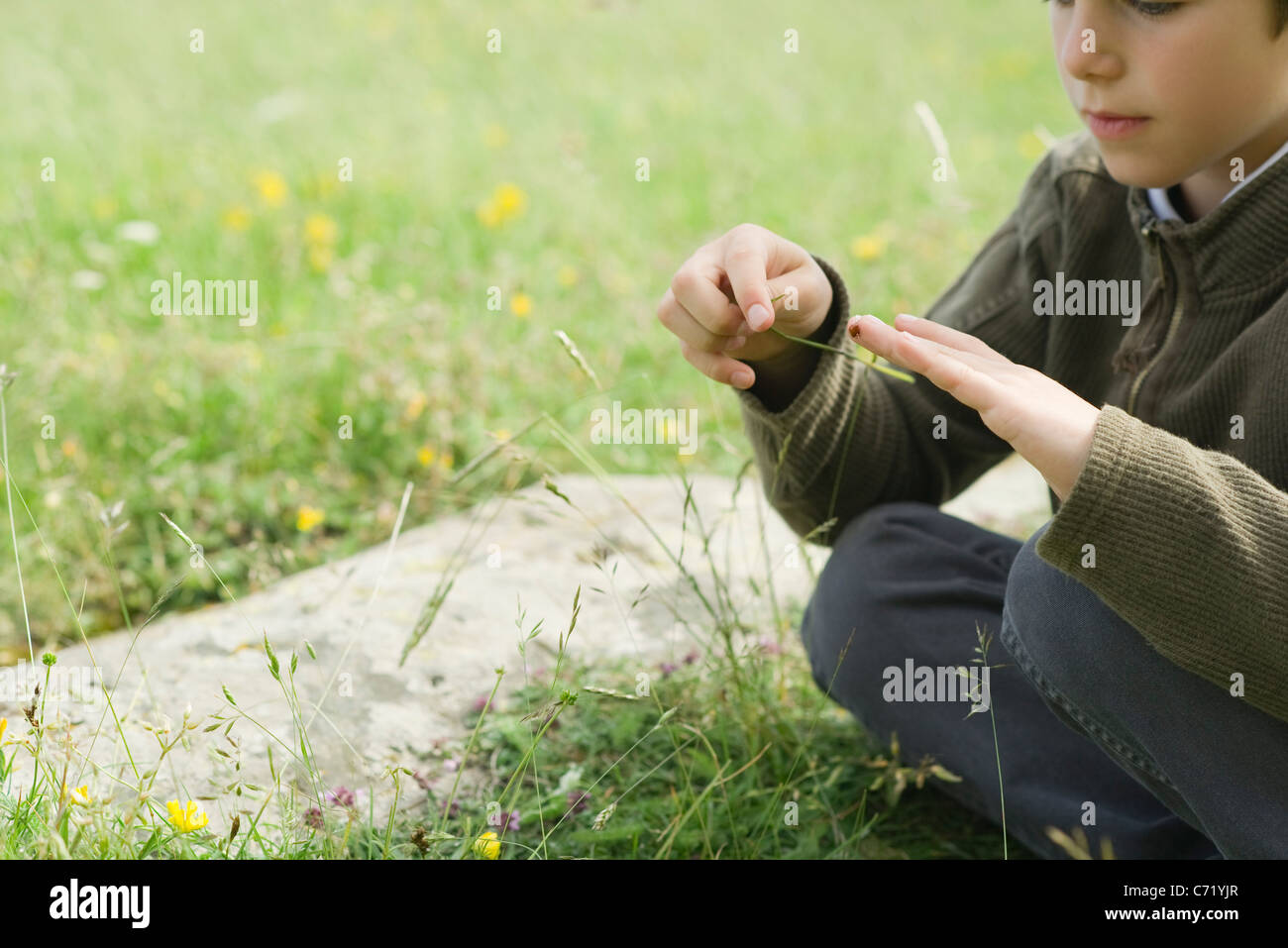 Boy sitting on grass, playing with ladybug - Stock Image