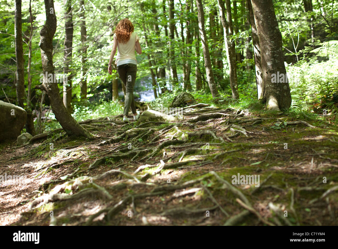 Woman walking in woods, rear view - Stock Image