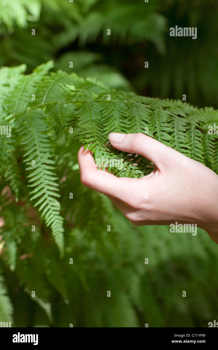 Hand touching fern frond - Stock Image