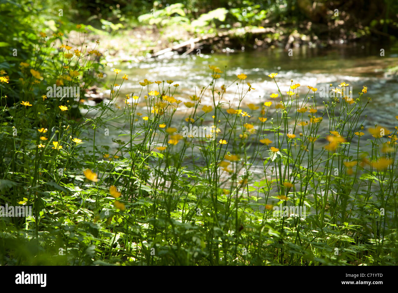 Wildflowers in nature - Stock Image