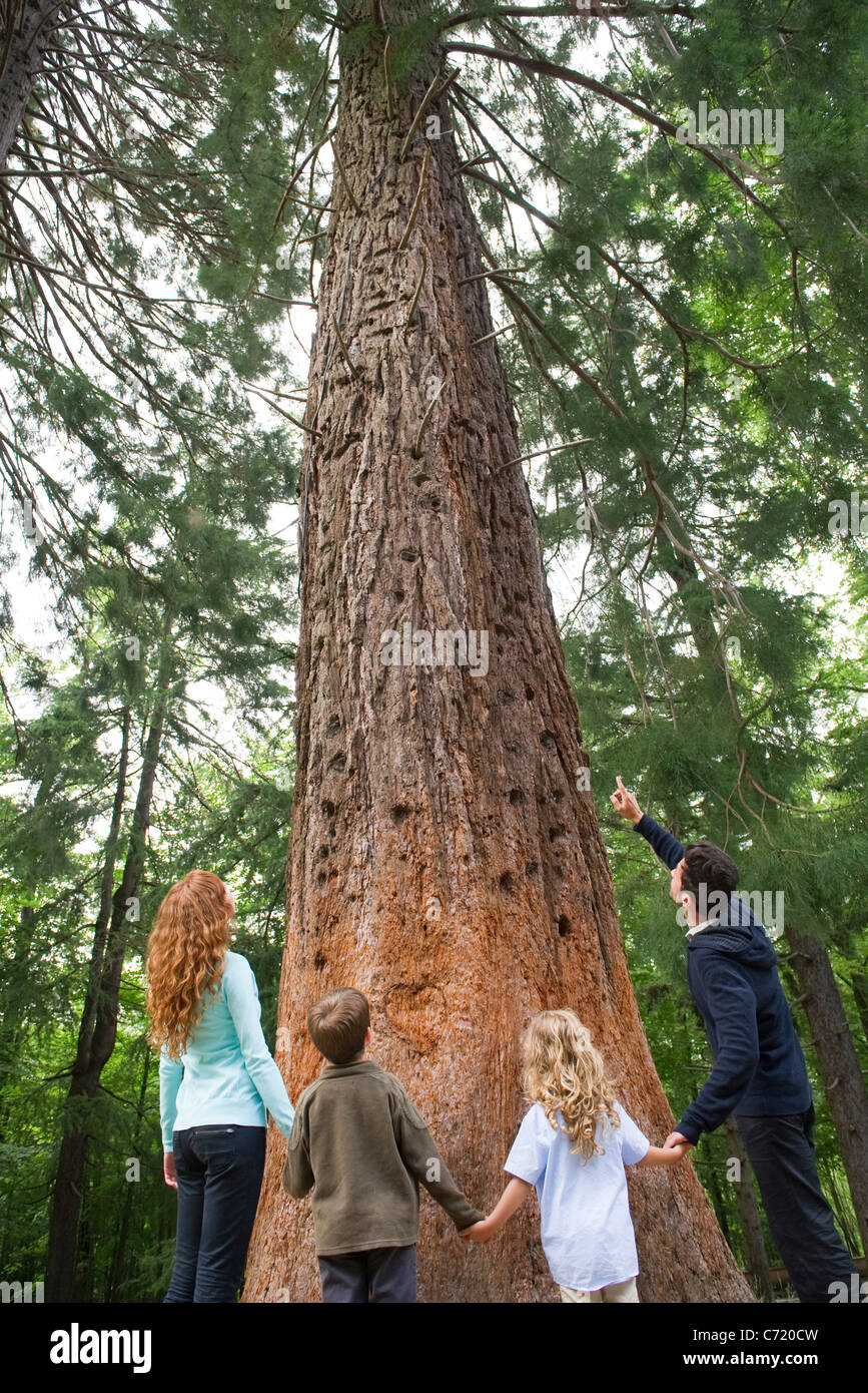 Family standing together at base of tall tree, holding hands, rear view - Stock Image