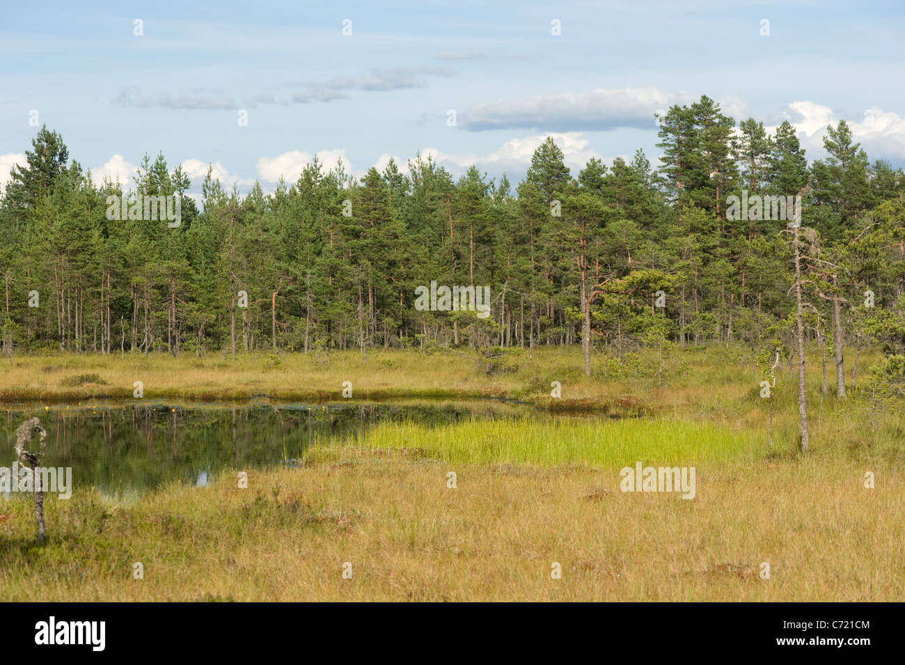 Raised bog with lake, Sweden Stock Photo