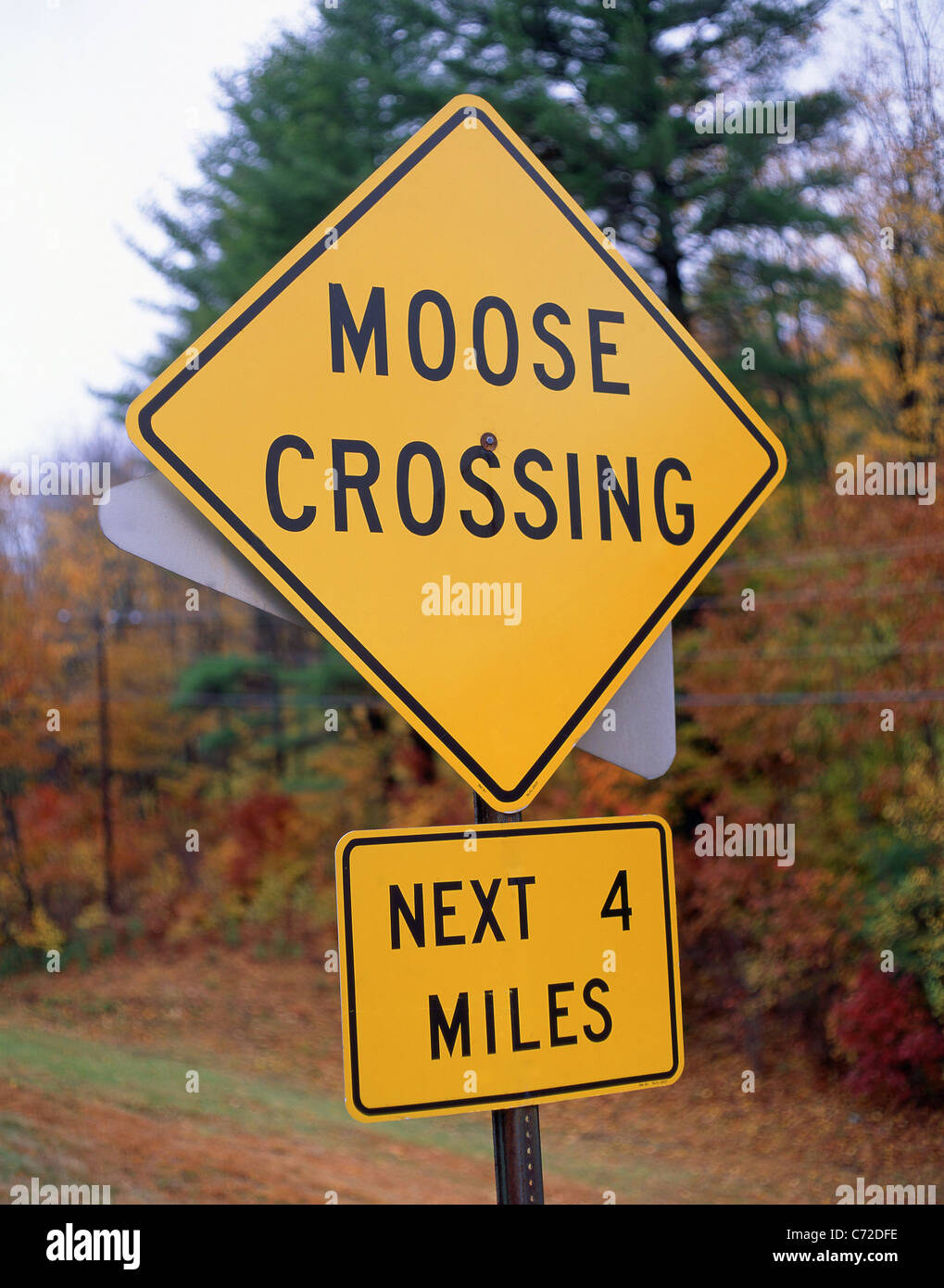 Moose crossing sign by roadside in fall, Massachusetts, United States of America - Stock Image