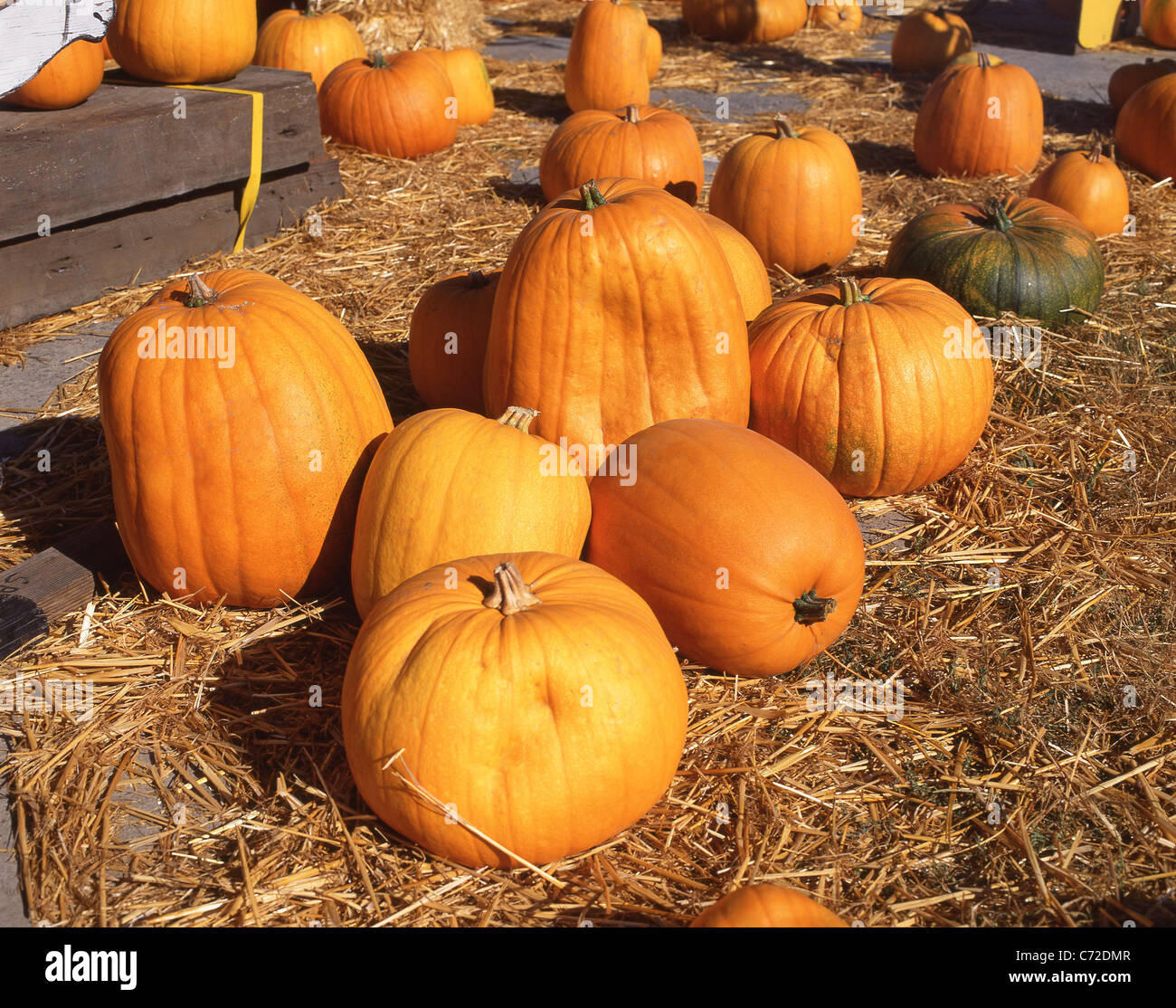 Halloween pumpkins by roadside, Massachusetts, United States of America - Stock Image