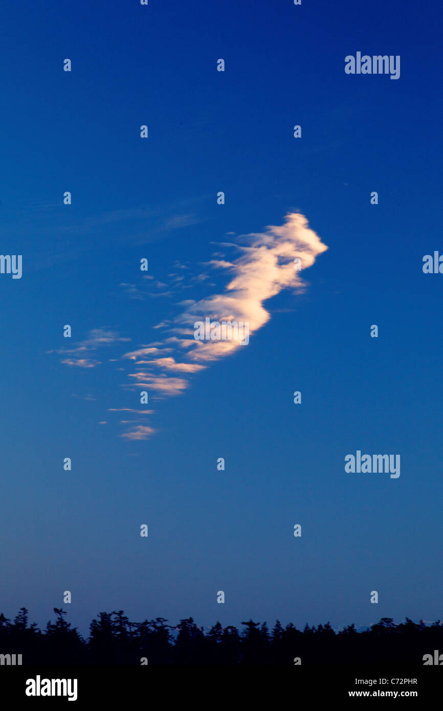 Wispy cloud in navy blue sky above silhouetted trees - Stock Image