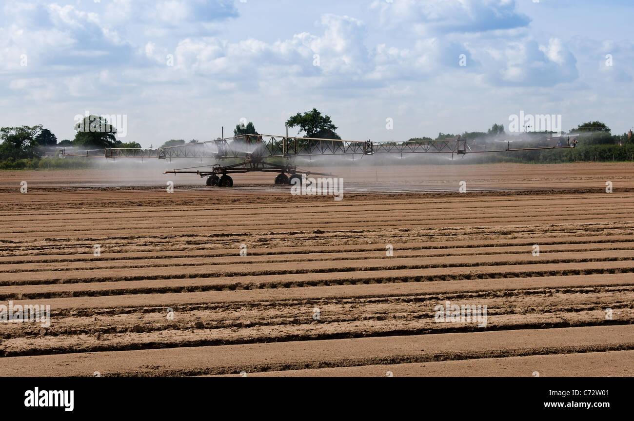 Irrigation system to bring water to dry fields and young shoots and seedlings - Stock Image