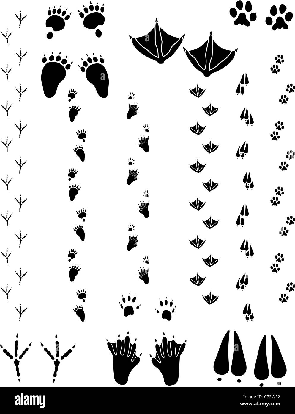 Paw prints & tracks, six different animals. Top Left to right: Black Bear, Seagull, Cat. Bottom: Crow, Beaver, - Stock Image