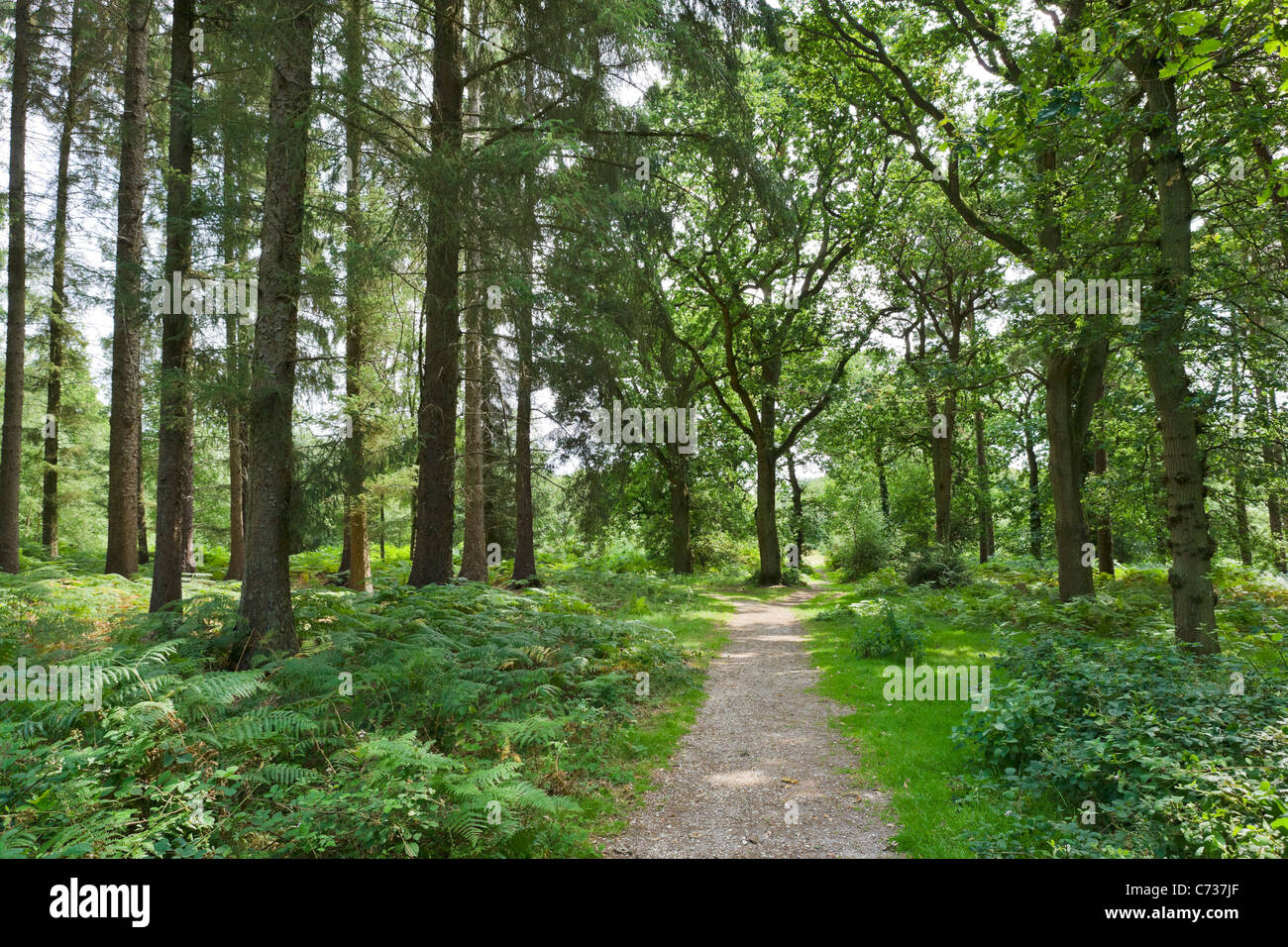 Path through the woods at Lucy Hill in the New Forest, Hampshire, England, UK - Stock Image