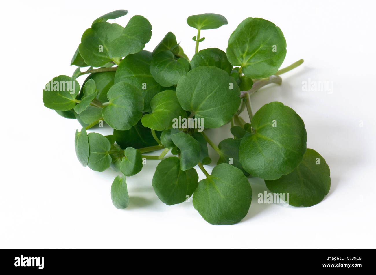 Watercress (Nasturtium officinale), leaves. Studio shot against a white background. - Stock Image