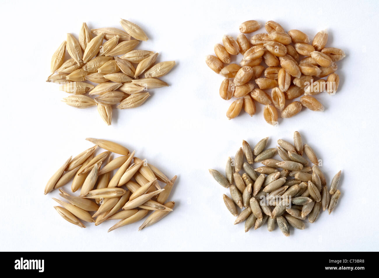 Various cereals: Barley (Hordeum distichon), Oats (Avena sativa), Wheat (Triticum aestivum) and Rye (Secale cereale). Stock Photo
