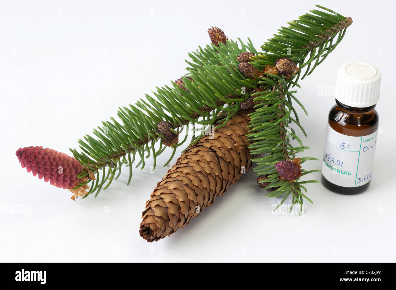 Common Spruce, Norway Spruce (Picea abies). Twig with flowers, cone and small bottle of essential oil - Stock Image