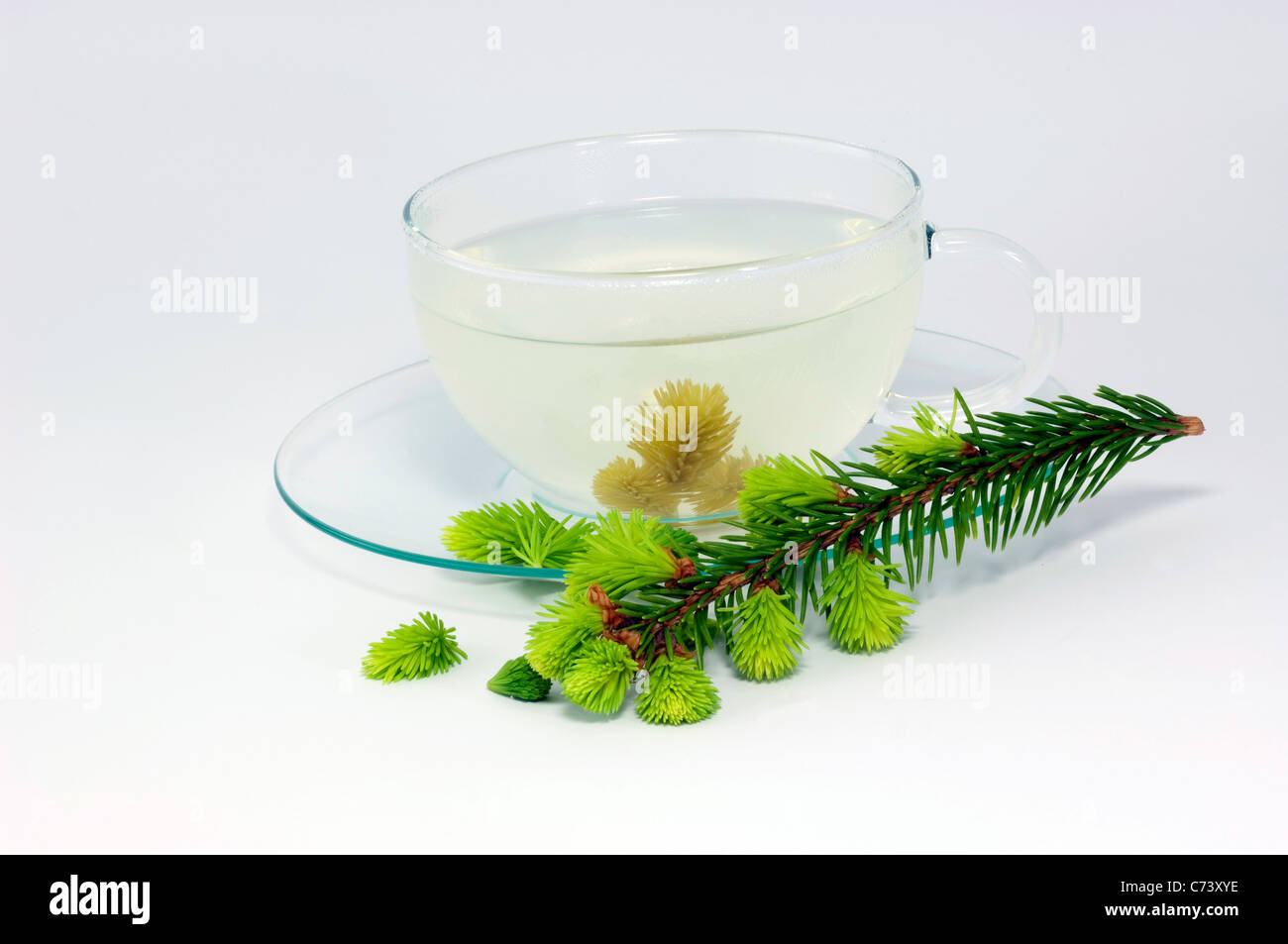 Common Spruce, Norway Spruce (Picea abies). Glass cup with infusion from fresh sprouts and twig. - Stock Image