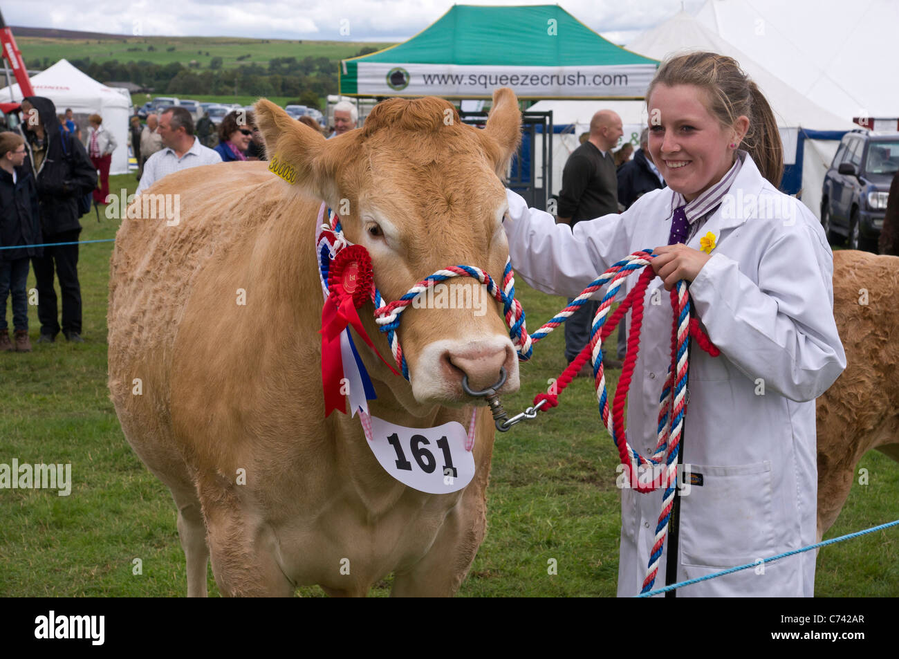 prize winning heifer (Blonde d'Aquitaine) photographed with it's handler at Wensleydale Agricultural Show, - Stock Image