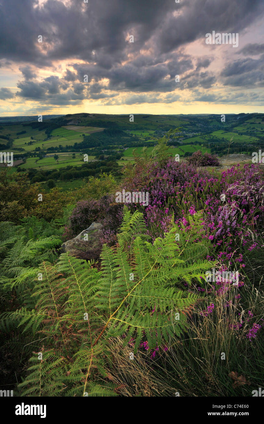 Dramatic late afternoon light over the heather and fern on Curbar Edge in the Peak District or England - Stock Image