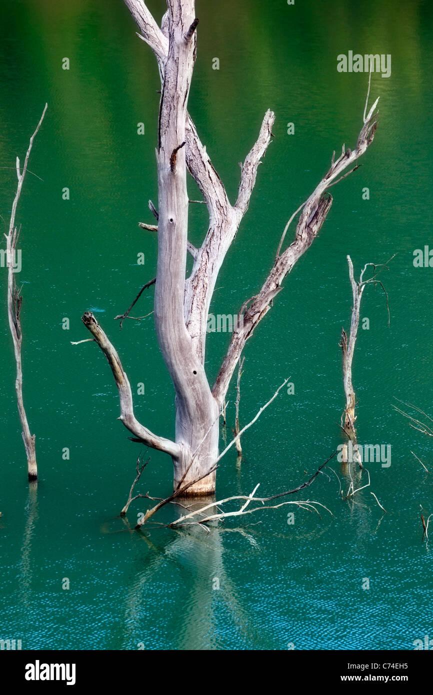 Submerged trees jutting out of the Zahara dam near Zahara de la Sierra, Cadiz Province, Spain. - Stock Image