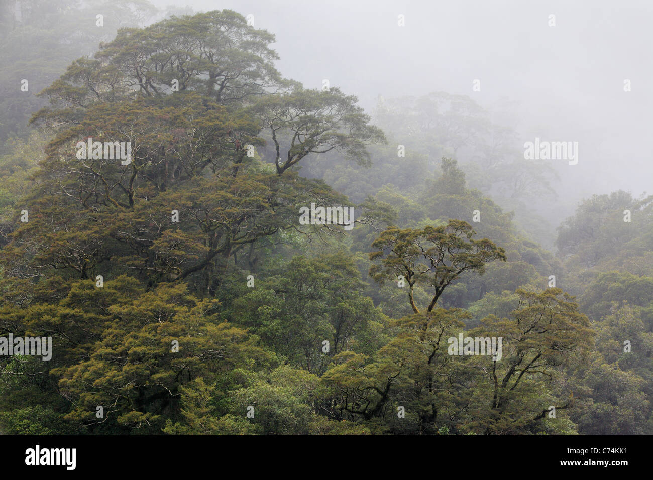 Mist envelopes the Beech forest along the Haast River in Haast Pass, New Zealand - Stock Image