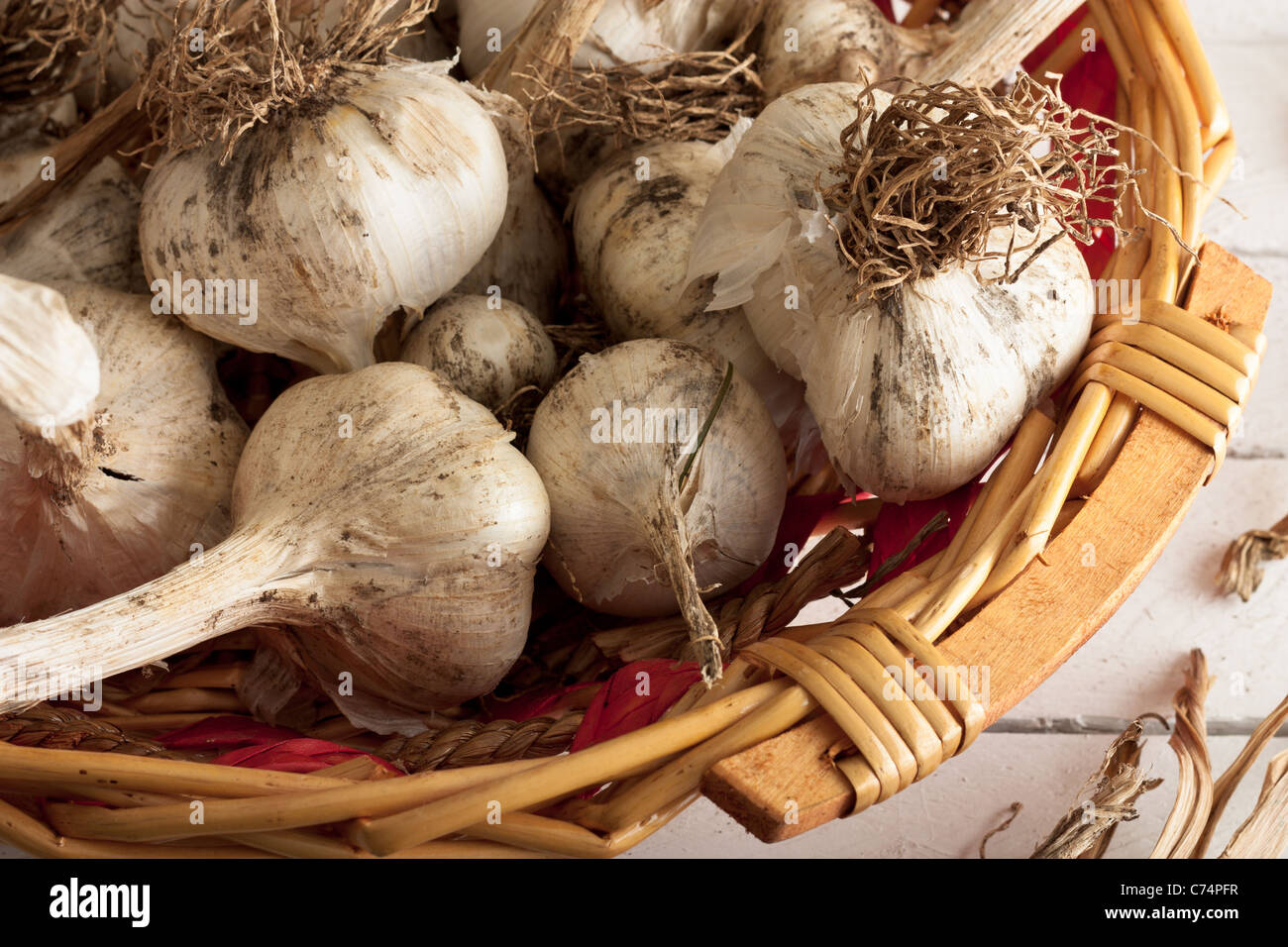 Just Plucked Garlic in a Wicker Basket on White Wood - Stock Image