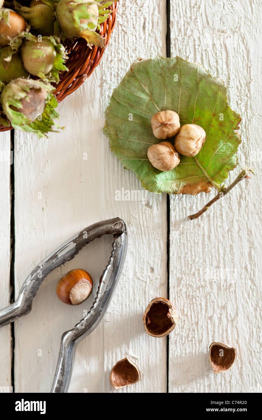 Fresh Unripe Hazelnuts with Nutcracker on White Wood - Stock Image
