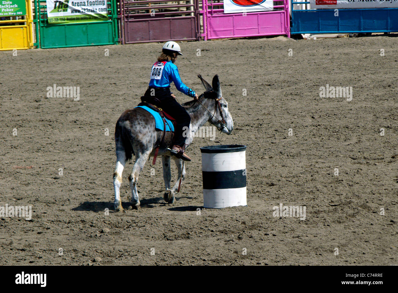 USA, California, Bishop 37th Mule Days, Donkey barrel race, Kristie Jorgensen riding 'Sagebrush Desert Delight' - Stock Image