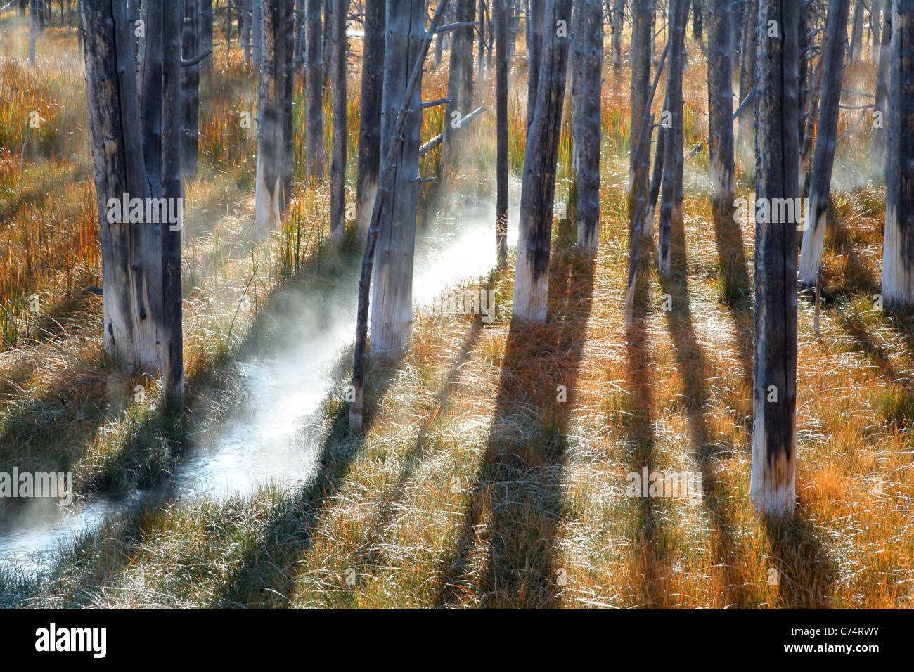 Thermal spring flowing through a misty meadow and dead trees in autumn, Yellowstone National Park, Wyoming, USA - Stock Image