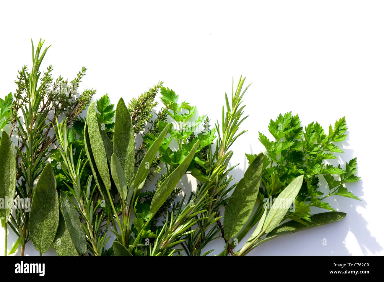 A green posey of parsley, sage, rosemary and thyme make a decorative border, isolated against white background for - Stock Image