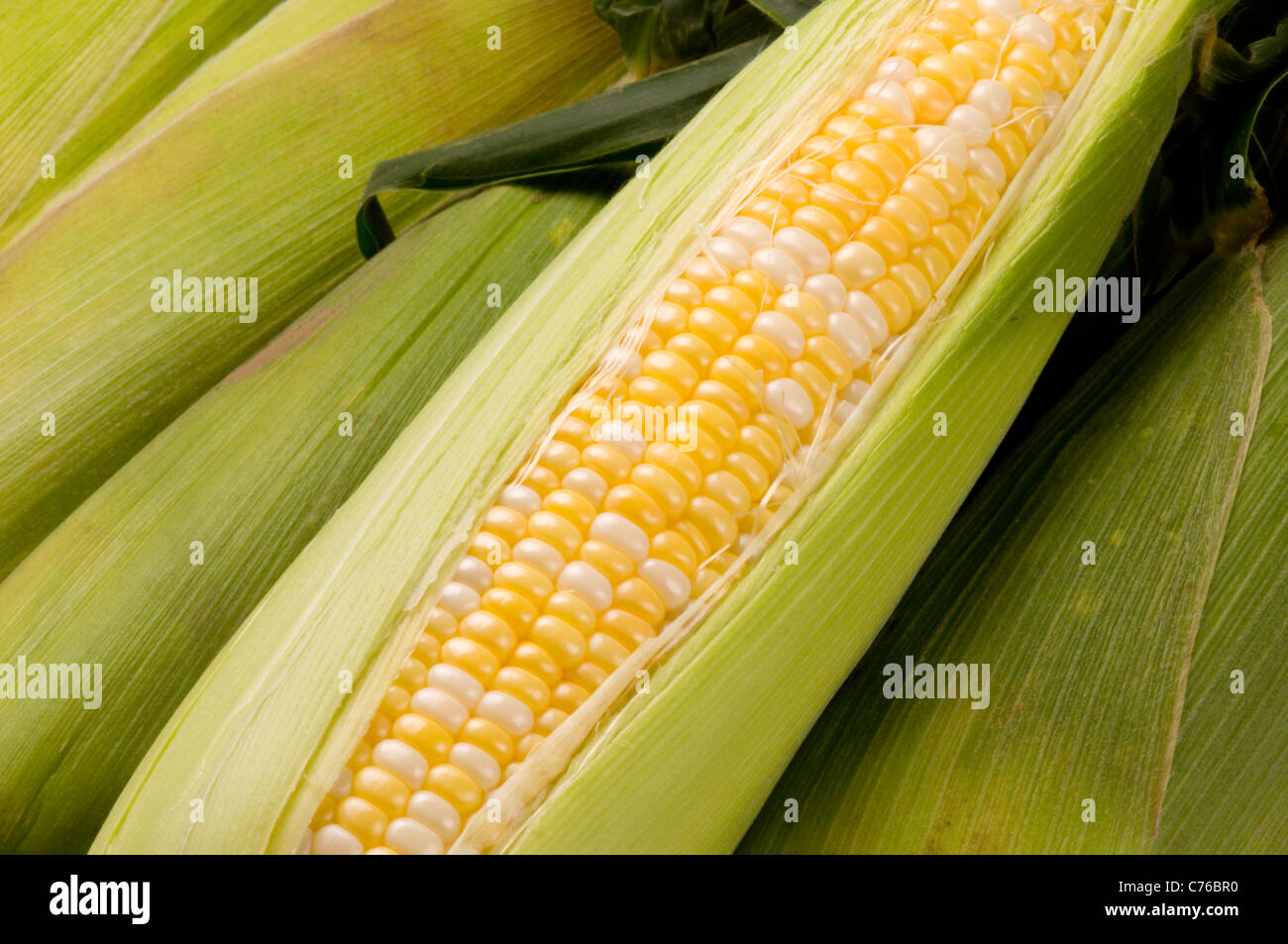 Husked ear of corn - Stock Image