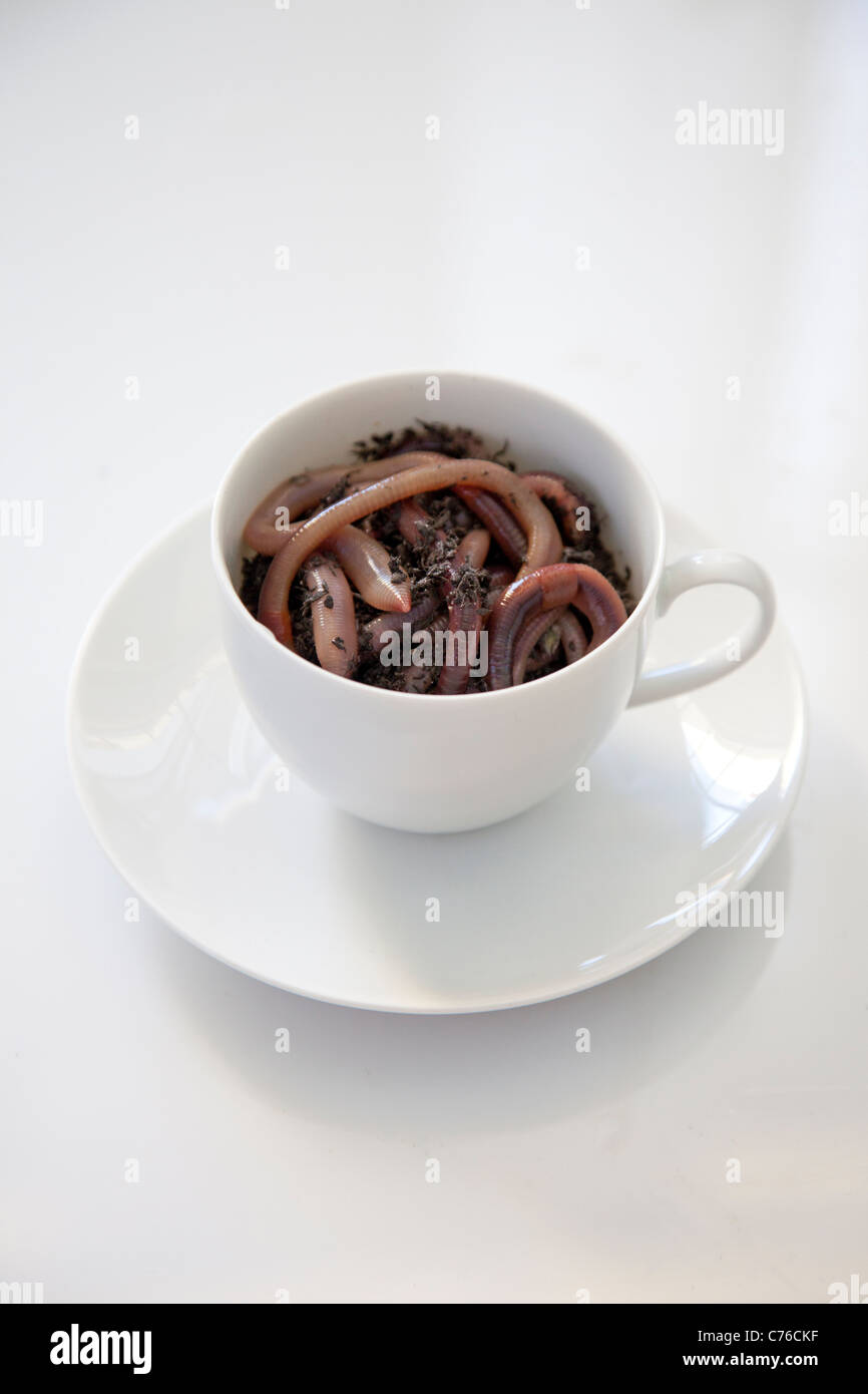 coffee cup filled with worms - Stock Image