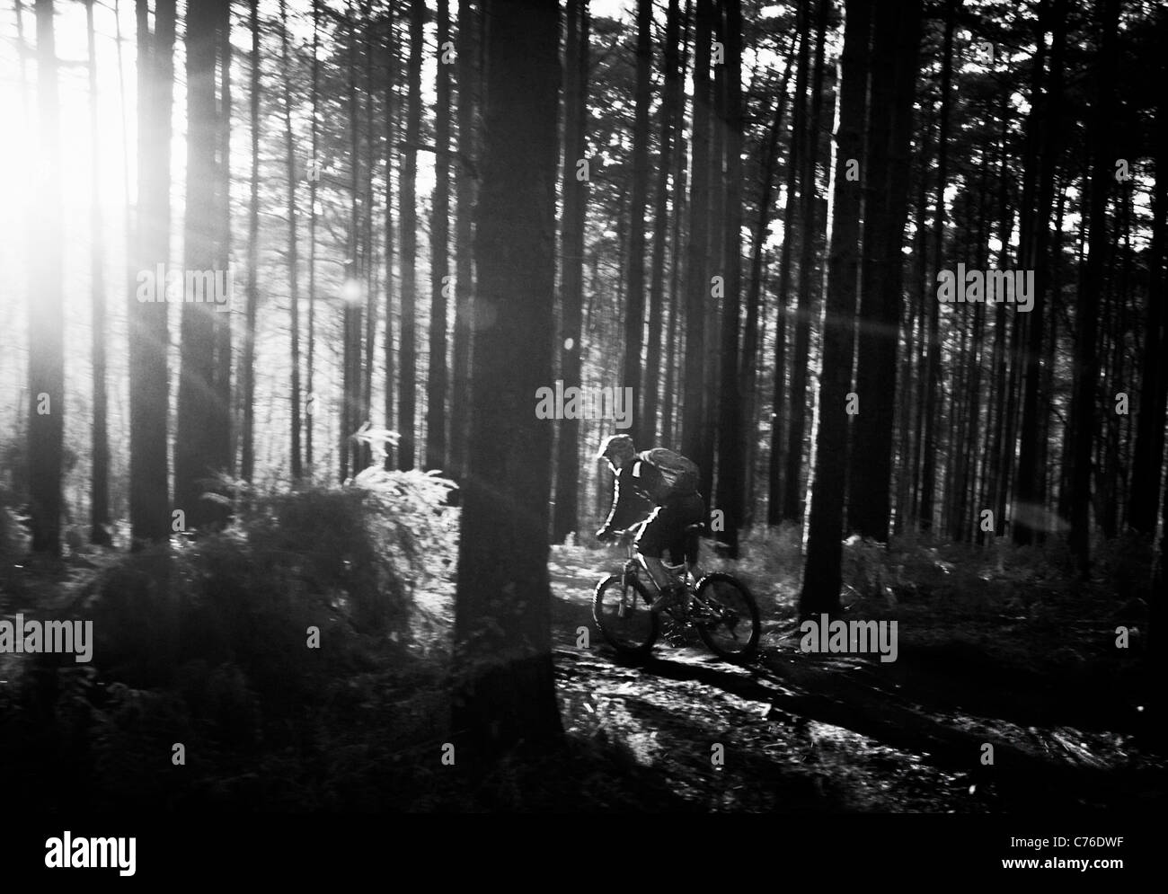 Mountain biker in the woods, in Black and white - Stock Image