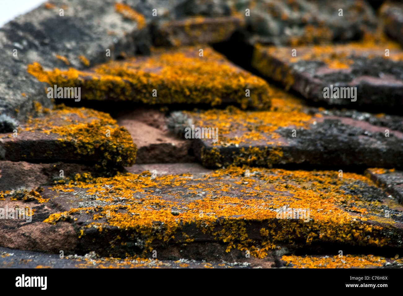 Moss growing on Roof Tiles, Formby, UK - Stock Image