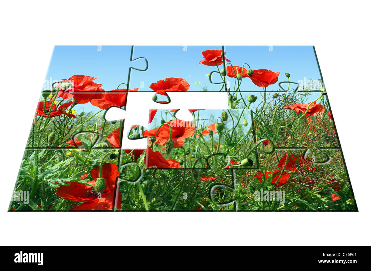 jigsaw puzzle Poppies: one part apart - Stock Image